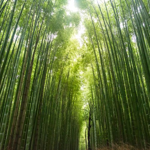 thumbnailimage of Blog:  Is Bamboo Really The Sustainable Hero We're Looking For? By Sabine Bittle