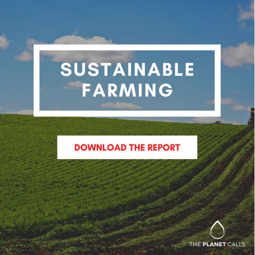 thumbnailimage of Report: Sustainable Farming