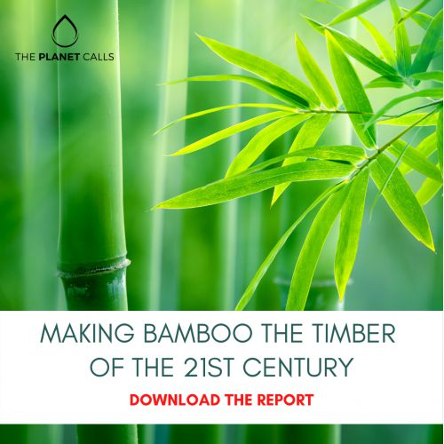 thumbnailimage of Report: Making Bamboo the Timber of the 21st Century